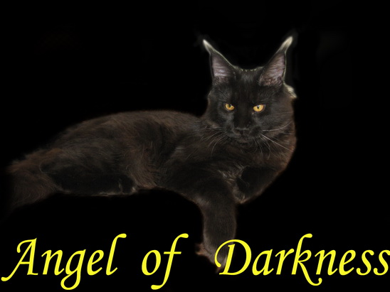 Absolute Genial - Angel of Darkness