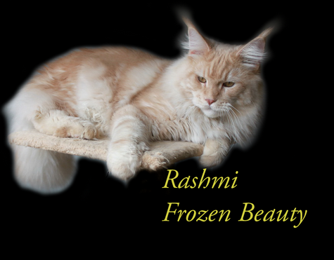 Frozen Beauty - Rashmi